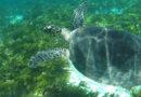 Una década para salvar a los océanos a través de la ciencia y la investigación